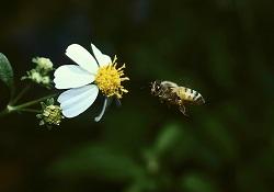 Que savez-vous sur les allergies au pollen ?