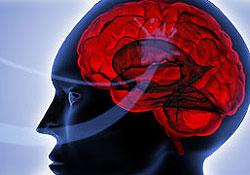 D�couvrez les capacit�s du cerveau humain