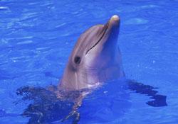 Phoenix, le dauphin star