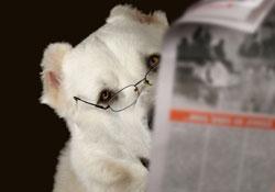 Les mystères de l'intelligence animale