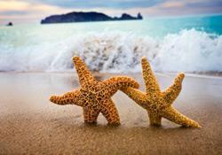 Le quizz spécial plage !