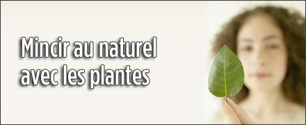 Mincir au naturel avec les plantes for Plante pour mincir