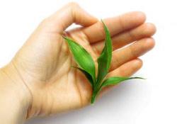 Comment combiner médecine des plantes et médicaments