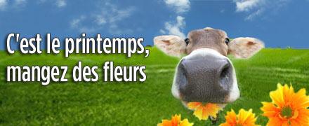 C'est le printemps, mangez des fleurs