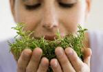 Testez vos connaissances en Phytothérapie