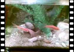 Vidéo : Le plus enfantin des poissons d'avril